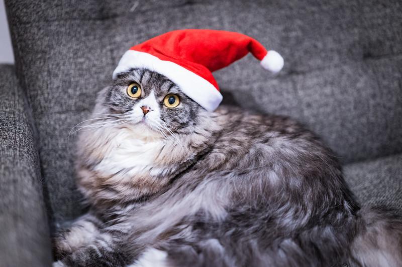 ゴゴジャンのchristmas_cat