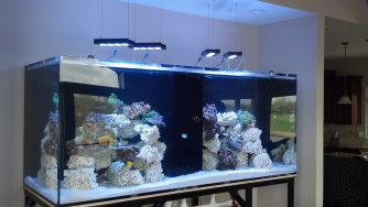 New Reef Tank Installation