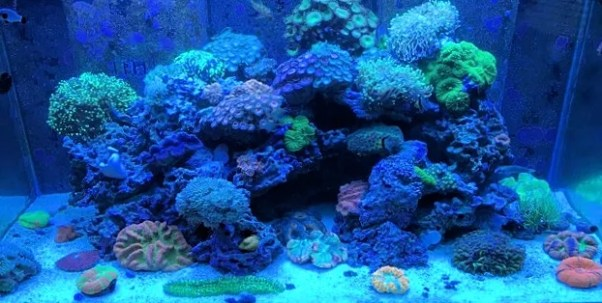 Amazing 400 Gallon Reef Tank Under Blues