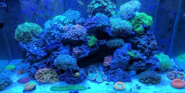 Amazing 400 Gallon Reef Tank Under Blues