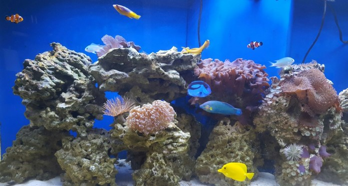 New reef tank