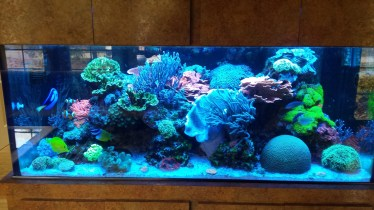 Saltwater Reef Tank