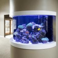 Custom Built In Saltwater Reef Aquarium