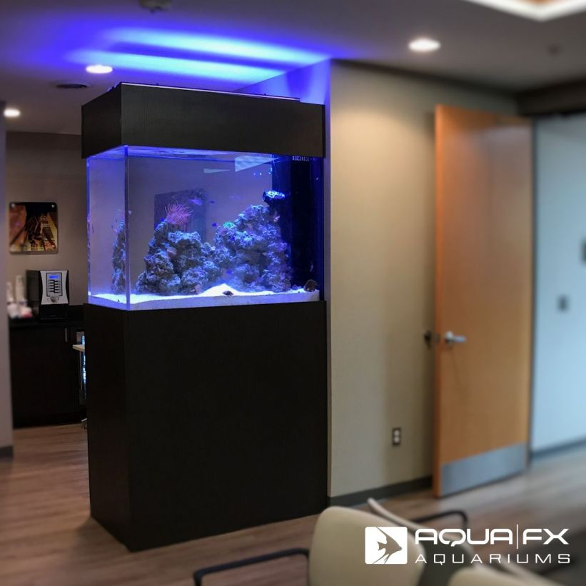Aqua FX Designed and Installed Living Reef
