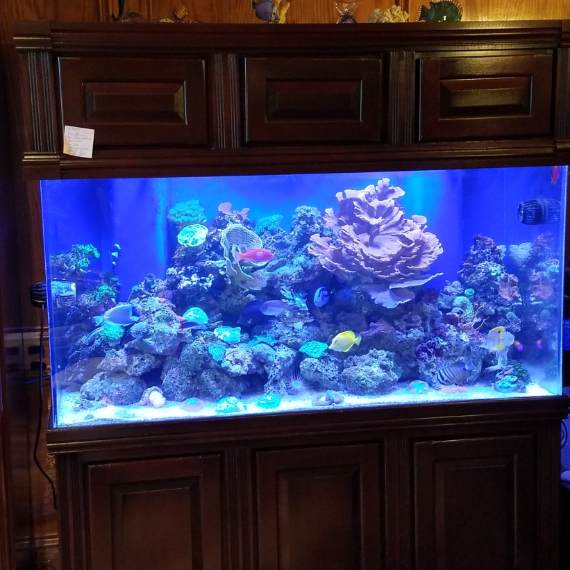Michigan Reef Tank