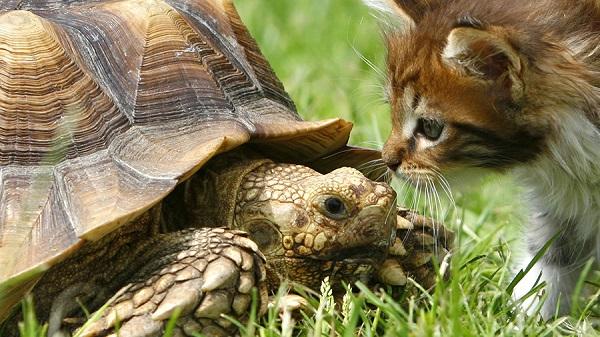 стратегия черепаховый суп