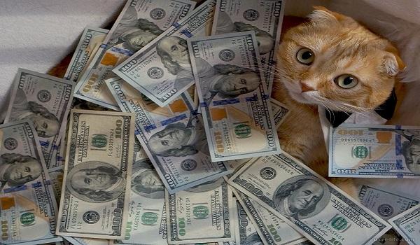 Сколько зарабатывает трейдер