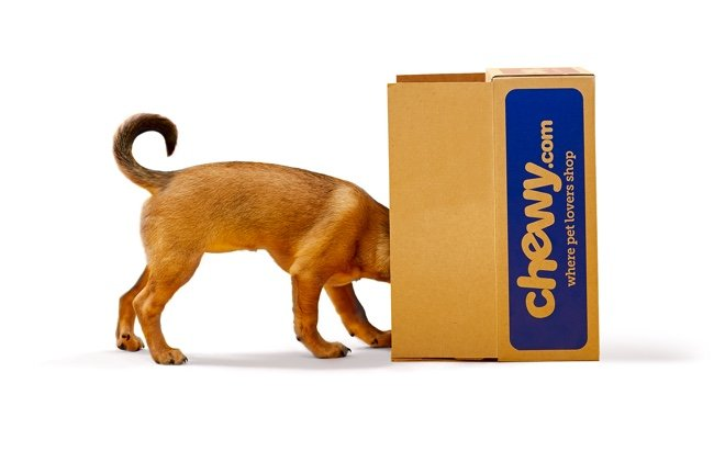 Why Chewy Inc (NYSE: CHWY) stock is rising