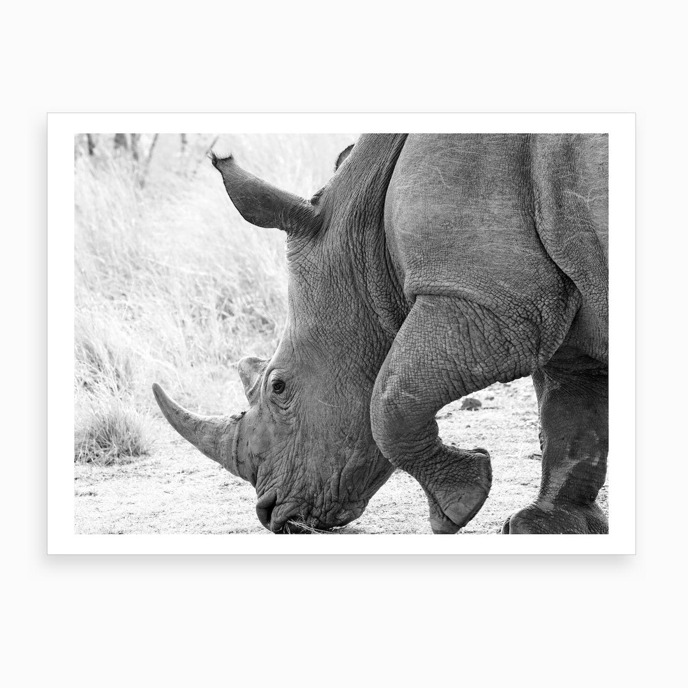 rhino in africa art