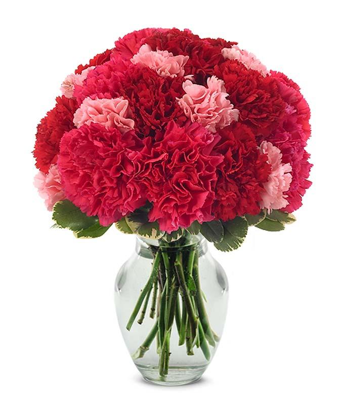 Image result for carnation