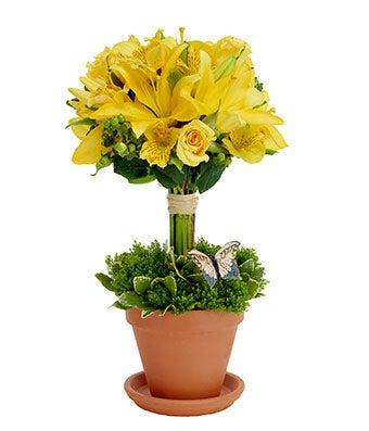 topiary greetings