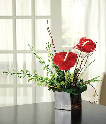 Contemporary Anthurium Garden At From You Flowers