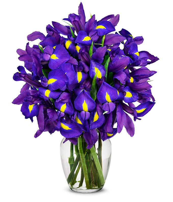 Stunning Blue Iris 15 Stems At From You Flowers