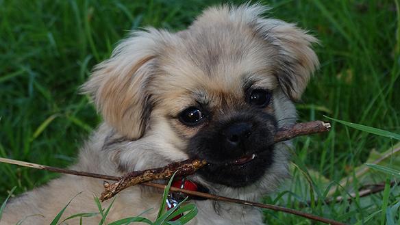 Lilla söta vovven Doris är en hund i Stockholm som jag ibland träffar på! Älskar dig lilla sötnos! Önskar jag träffar dig oftare! *L*  Foto Peter Ahlborg