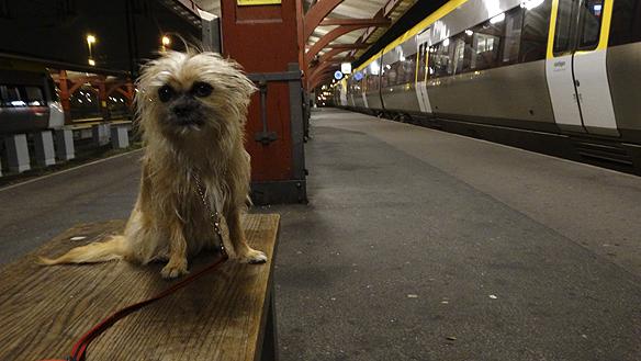 Peter Ahlborg väntar på ett tag på centralstationen i Göteborg tillsammans med vovven Fia. Då framkommer det att 300 ensamkommande flyktingbarn kommit till Göteborg på ett dygn. Foto: Peter Ahlborg