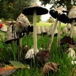 Dessa svampar står som en stad