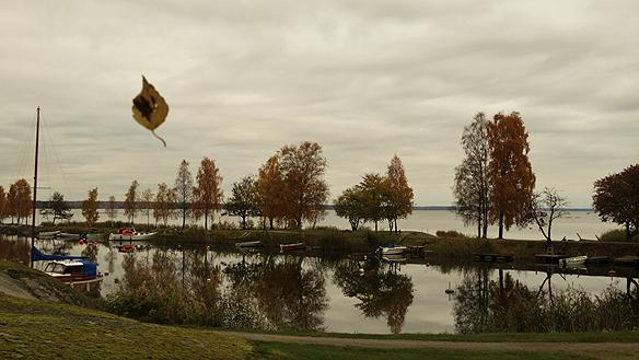 """Dagens bild """"Svävande löv"""" (rubrik)  Fick se ett svävande löv häromdagen när jag var ute och gick i Vänersborg, denna vackra   höstdag. Döper denna bild till """"Svävande löv"""". Bilden är tagen den 20 oktober 2015 i   Vänersborg. Foto Peter Ahlborg."""