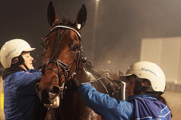 Oh, vilken fin häst Promo Kemp är! Foto: Peter Ahlborg