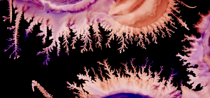 Fingers of fuschia and peach spread like fractals against black