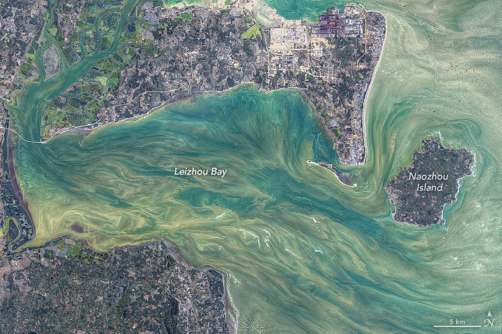 False-color satellite image of Leizhou Bay.