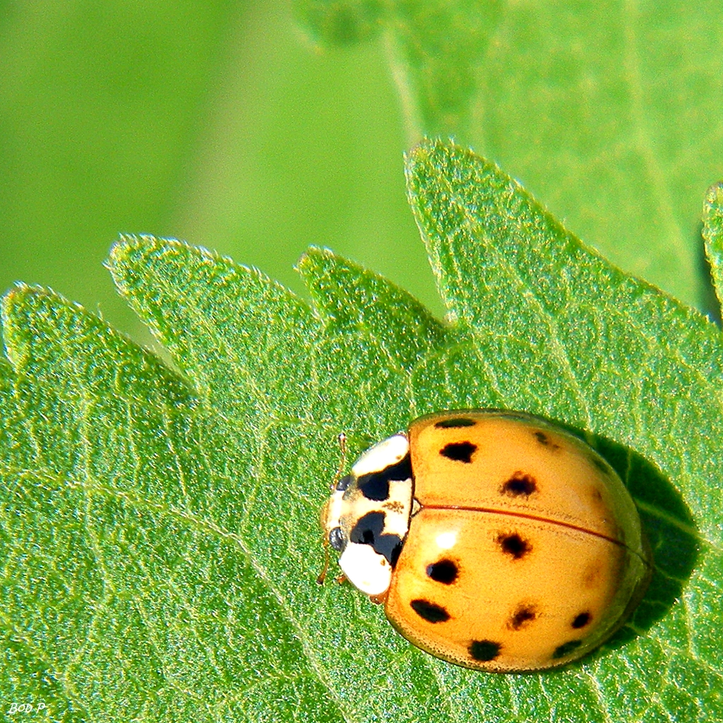 Tis The Season For Nuisance Pests Rock County Gardening