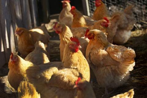 マクドナルドの中国産鶏肉問題
