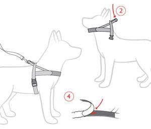 Ezy dog harness instructions