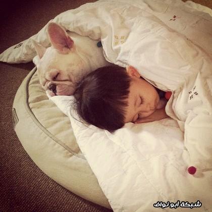 صداقة ينام مع كلب