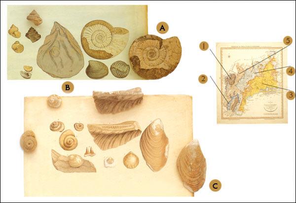 Razlikuju se dvije glavne vrste mikorize: ektotrofna i endotrofna mikoriza.