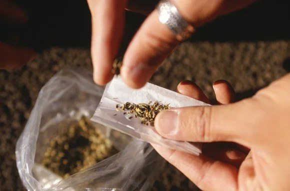 A person rolls a marijuana cigarette.