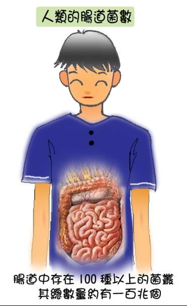 把好菌養在體內 - 海爸的隨興紀錄 - udn部落格