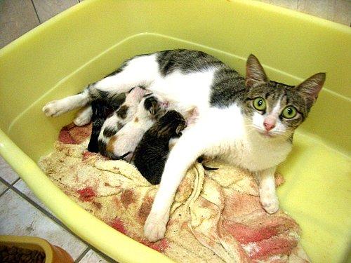 終於把小貓仔給盼出來啦! - 林雨潔貓咪中途之家 - udn部落格