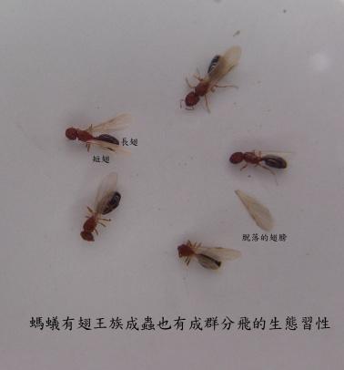 螞蟻的生態與防治 - 白蟻跳蚤蟑螂危機~就交給蟲蟲達人來幫您搞定! - udn部落格