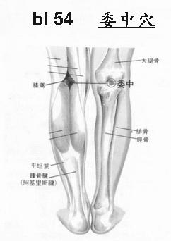 lu/5:尺澤 chih3 tseh2 - 經絡學 acupuncture points - udn部落格