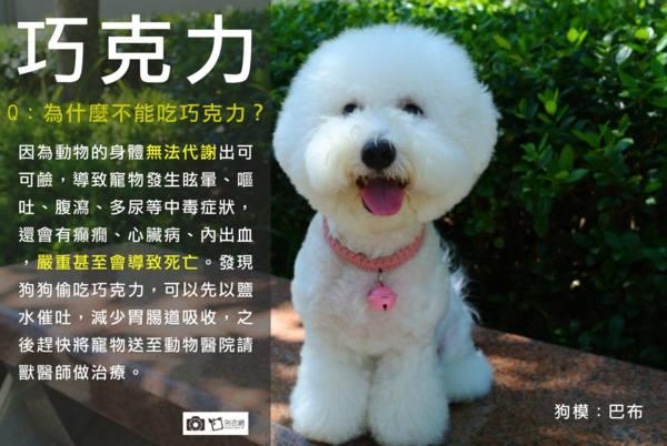 Q:為什麼狗不能吃巧克力? - 郭老師瑪爾濟斯,柴犬培育犬坊UDN Blog - udn部落格