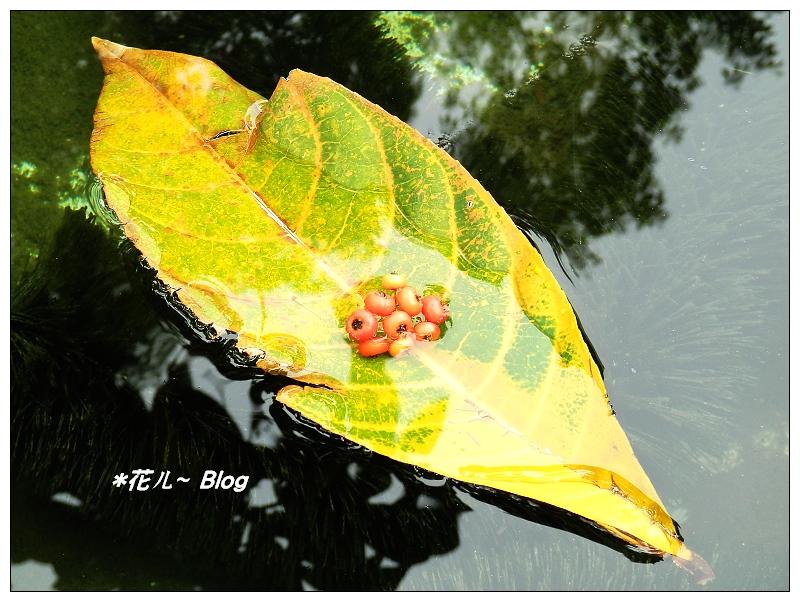 臺中~橙紅の火刺果 - *花ㄦ~ Blog - udn部落格