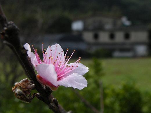 車行臺三線 冬訪新竹關西 1010111旅遊紀錄 - 我家在臺北-影像輯 - udn部落格