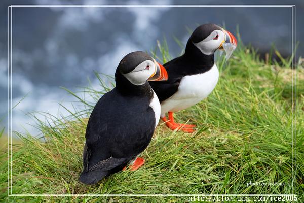 2016 英國&冰島初夏紀行 冰島Iceland~~borgarfjörður eystri 賞海鸚鵡Puffin - 花鼠妹的異想世界 - udn部落格
