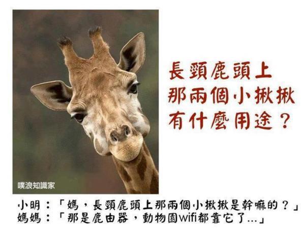 與長頸鹿的第一次親密接觸@關西六福莊生態渡假旅館 @ TUBS-N山寨新聞臺 :: 痞客邦