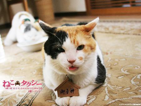 從國興衛視播出的日劇《貓咪計程車》而展開的中年療癒系漫遊 - 小肉球的部落格 - udn部落格