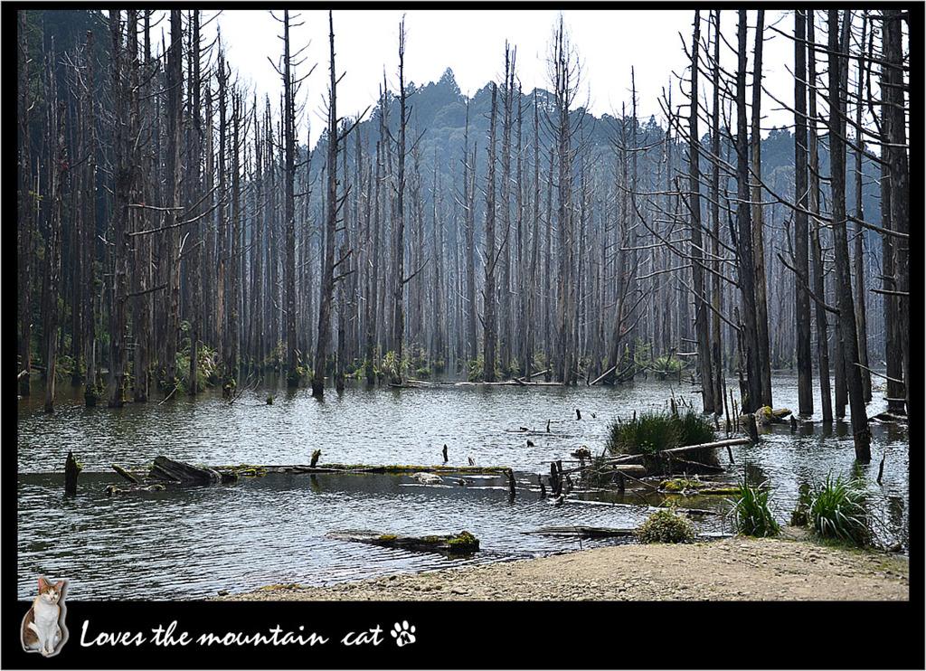 精靈的故鄉─水漾森林 - 愛山的貓 - udn部落格