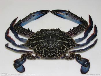 較常食用的螃蟹種類@熱門新聞!美食、消費、便宜都呼哩災|PChome 個人新聞臺