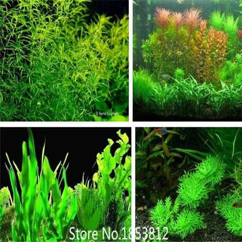 aquarium plants seeds - 20 kinds Aquarium Grass Seeds Water Aquatic Plant Seeds Easy to grow ...