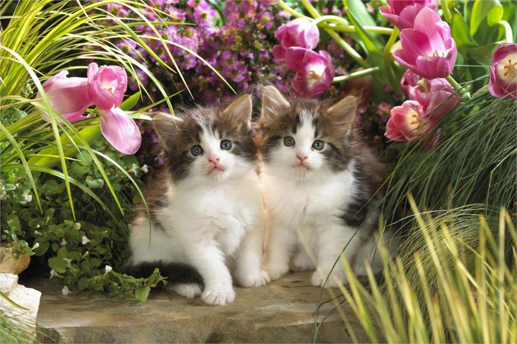 ⃝DIY marco bebé lindo del gato animal carteles y impresiones ...