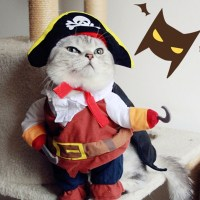 Popular Cat Pirate-Buy Cheap Cat Pirate lots from China ...