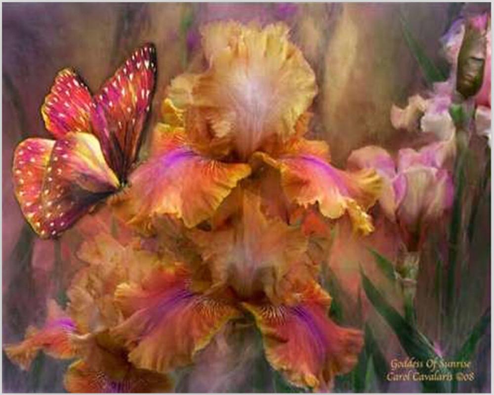 Moderne diy ölgemälde auf leinwand wandkunst 40*50 Schmetterling ...