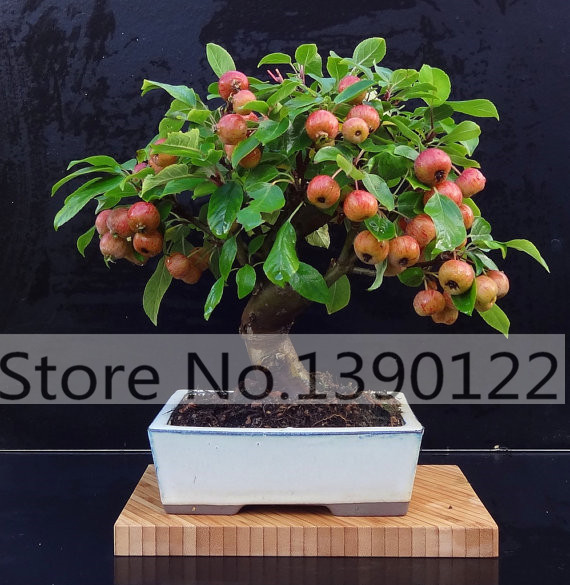 20 PCS/BAG red lemon tree also is Blood Orange Organic fruit seeds bonsai red lime seeds healthy food home garden plant pot