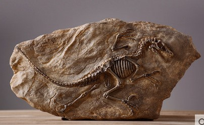 Faisal 3d Name Wallpaper Online Buy Wholesale Fossils From China Fossils