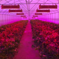 400 LEDs Grow Lights Full Spectrum 400W Indoor LED Plant ...