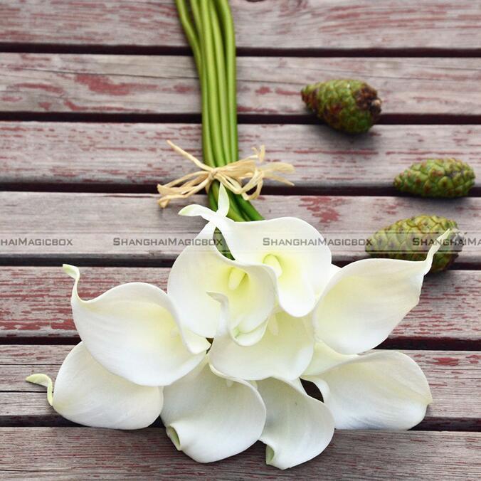 Calla Blume Kaufen calla schwarz von
